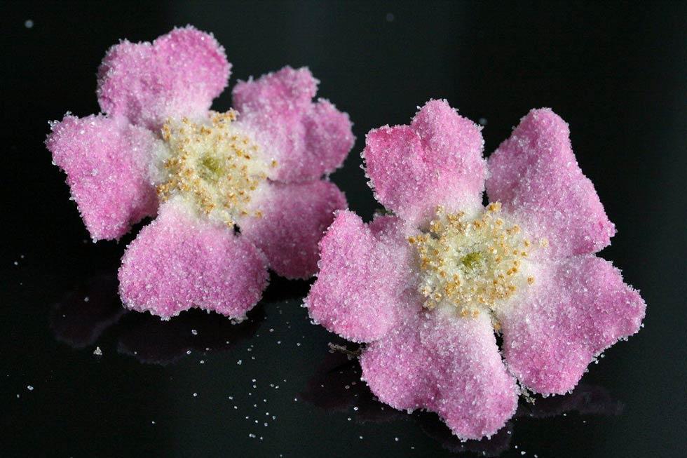 Zarte Blüten für den Gourmet