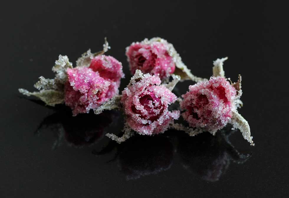 Essbare Blüten Uckermark