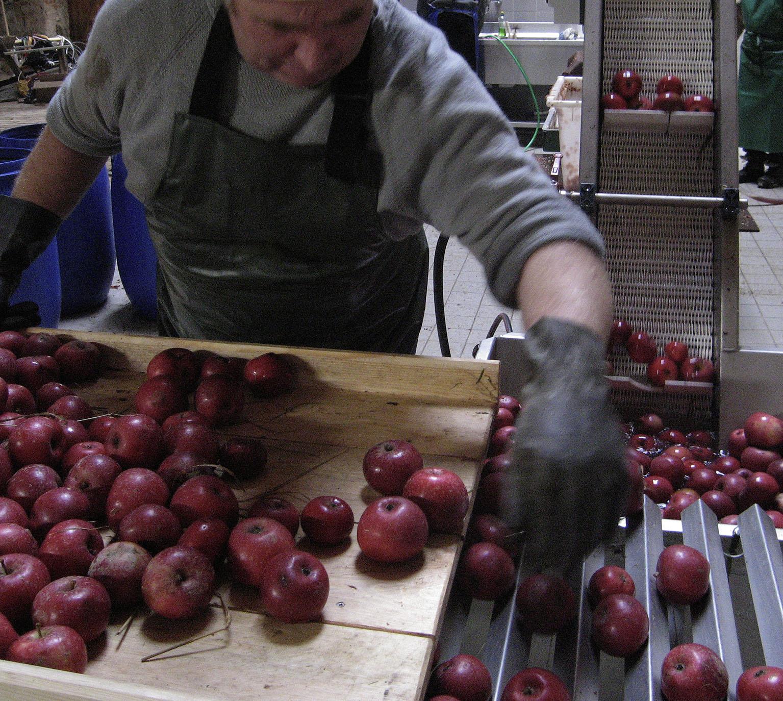 Apfelernte Kraatz